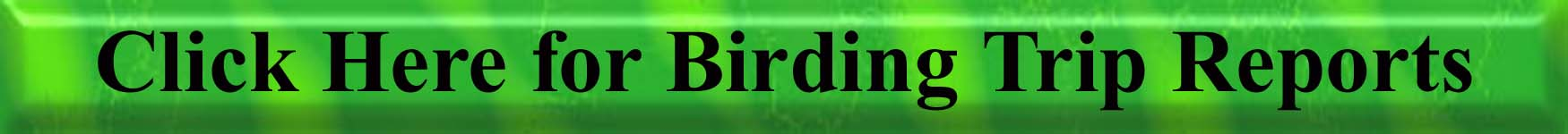 Click Here for the Birding Trip Reports